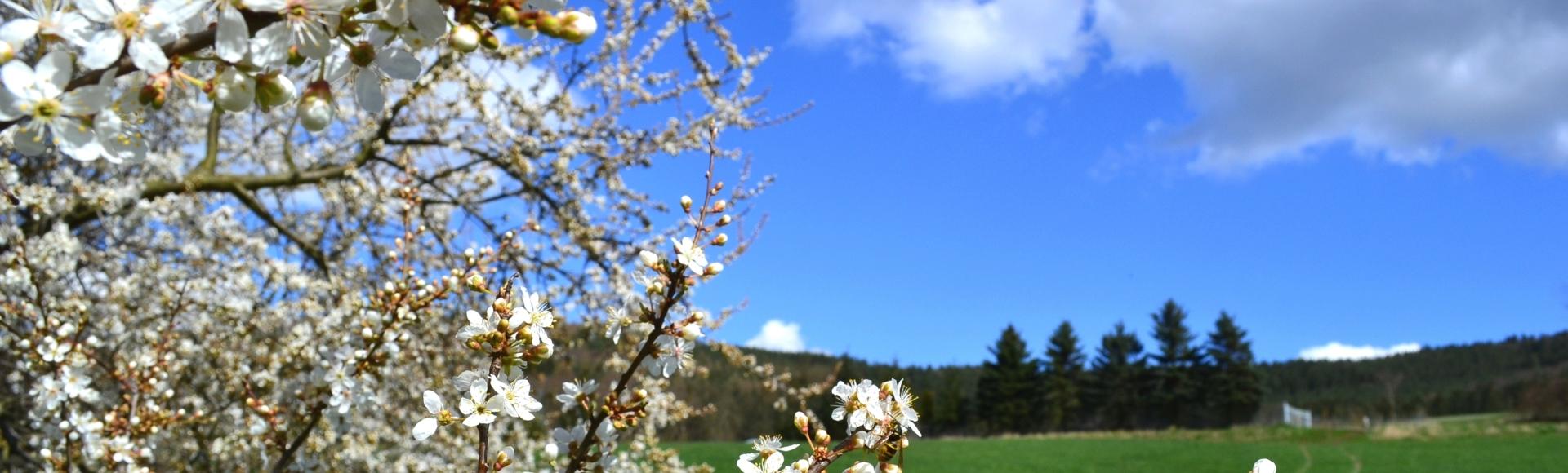 Frühling - Urlaub in der Rhön