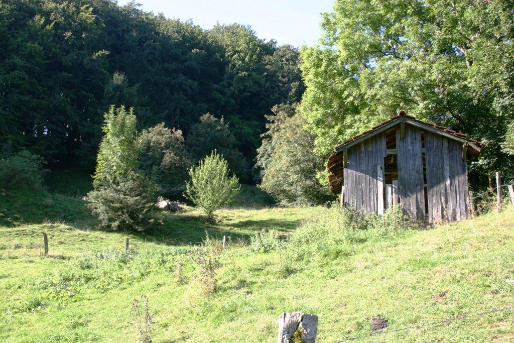 wandertour-gersfeld-guckaisee-pferdskopf-wasserkuppe-018