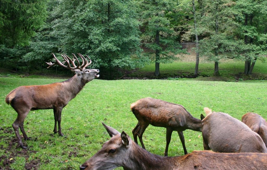 berghuette-wildpark-gersfeld_16