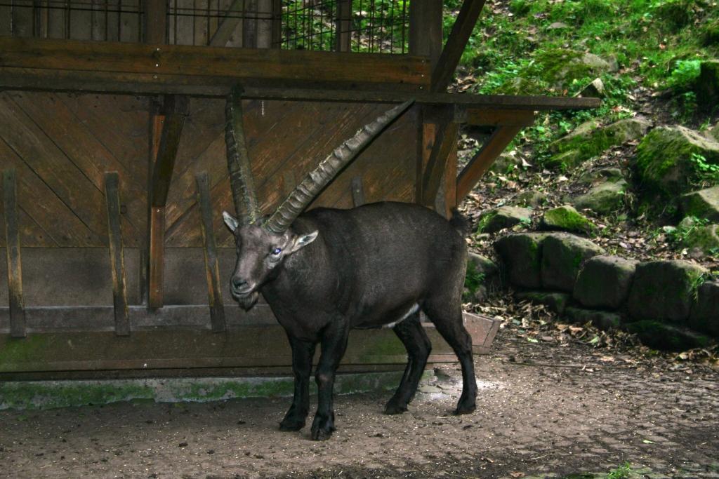 berghuette-wildpark-gersfeld_17