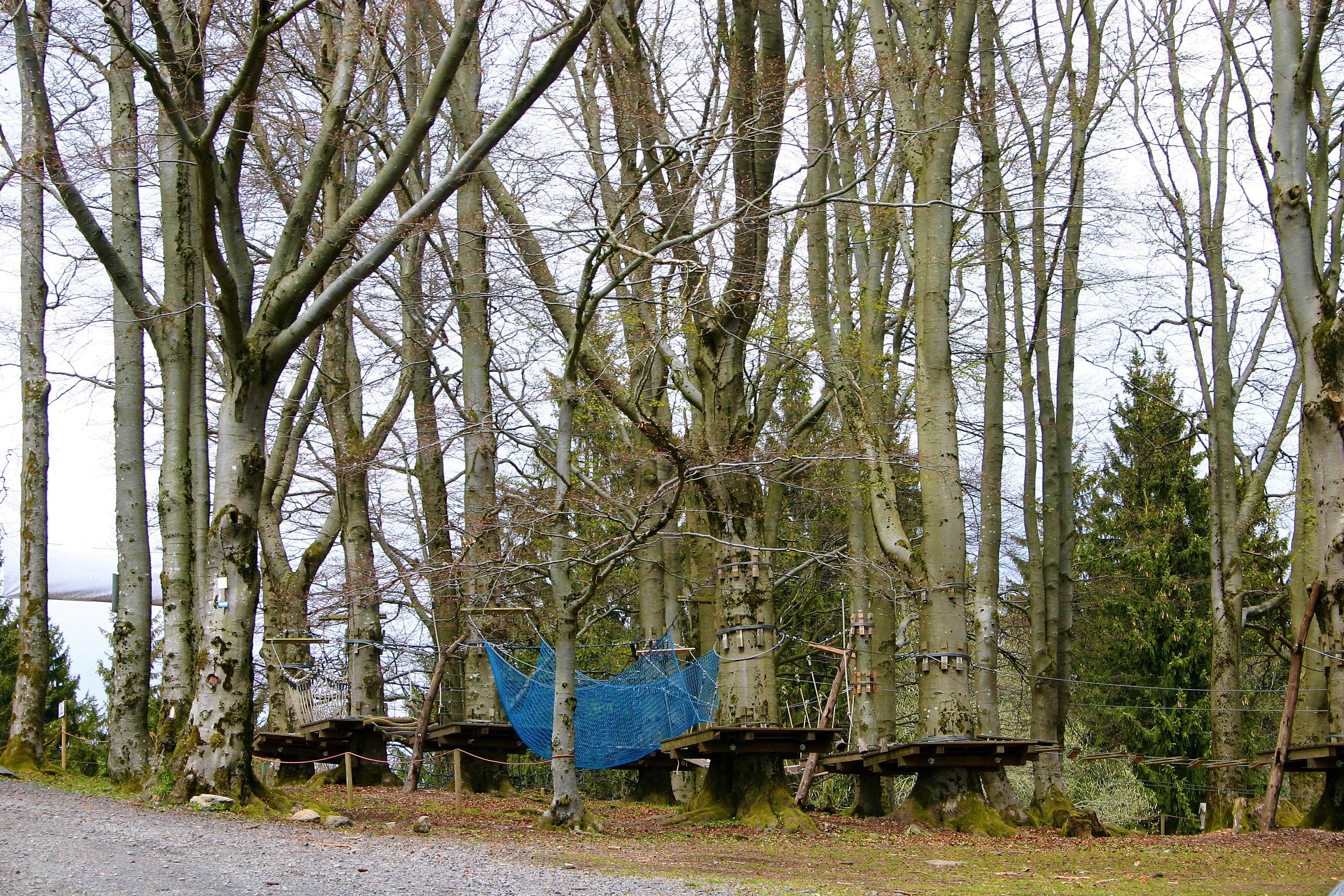 Hochseilgarten im Wald
