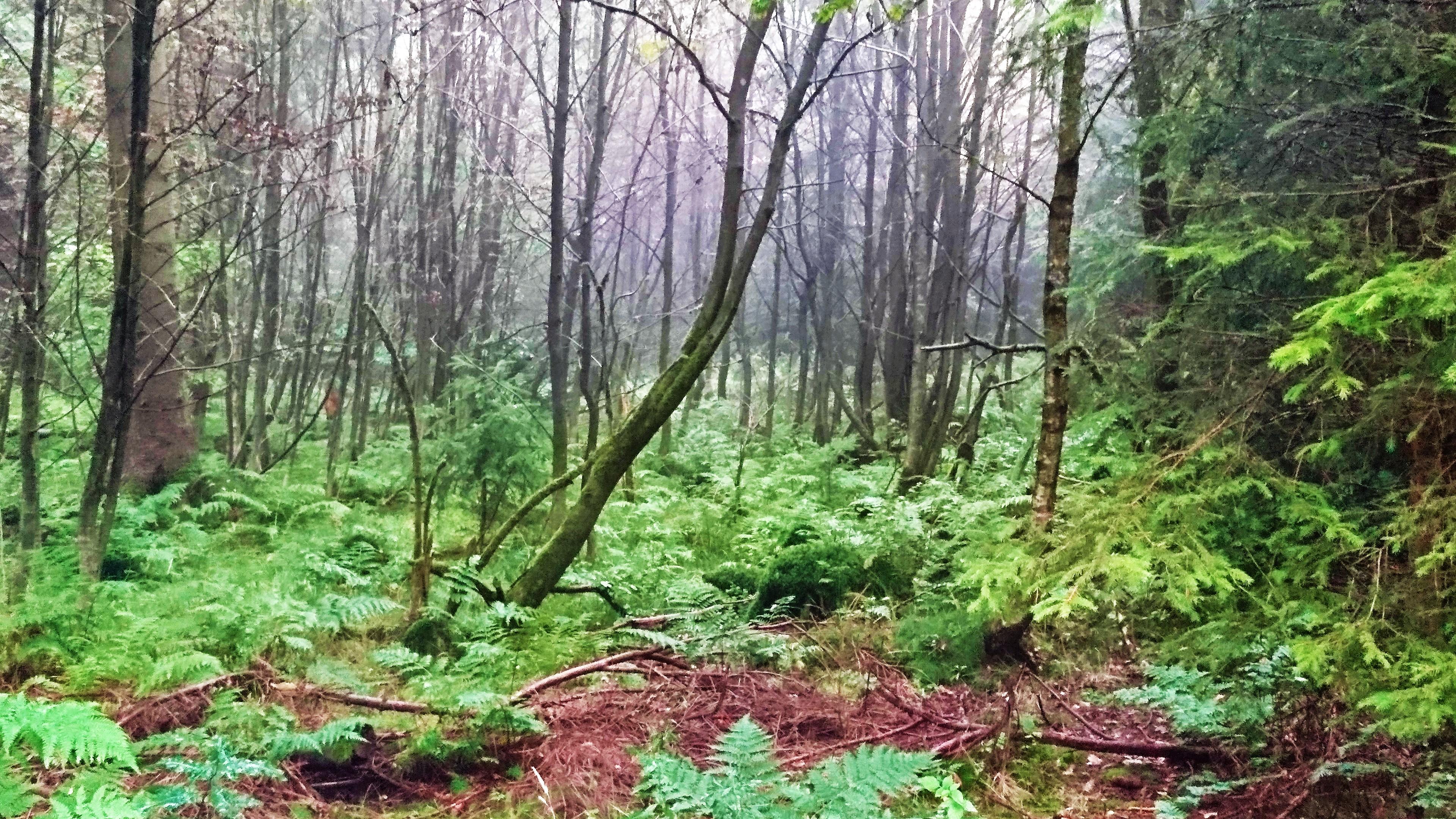 Blick in den Wald am Rooten Moor