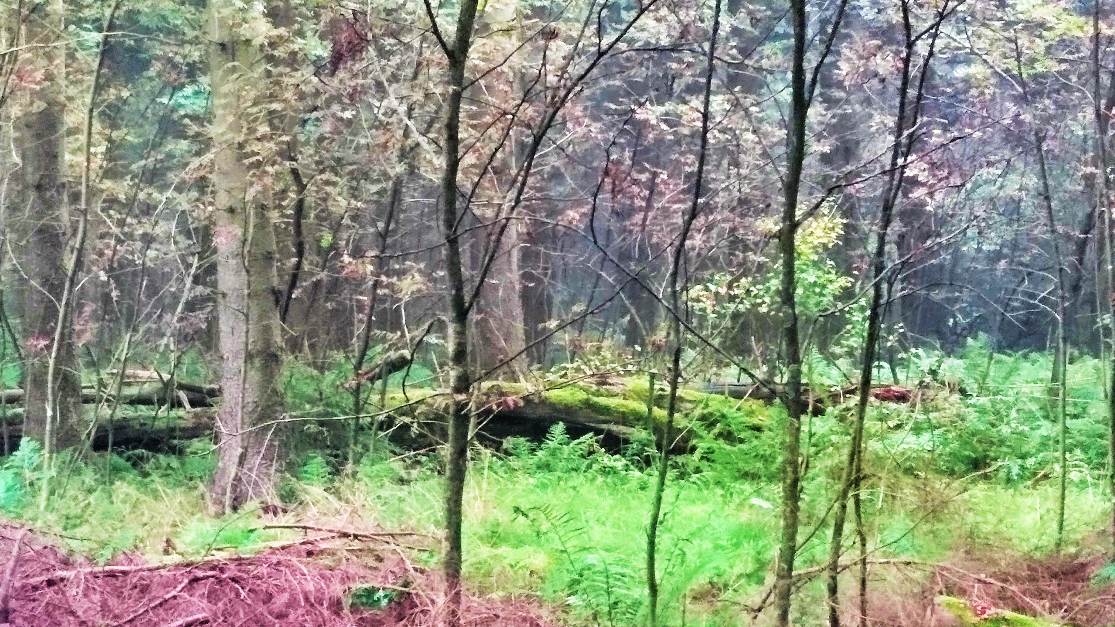 Alter Baum ruht in der Rhön